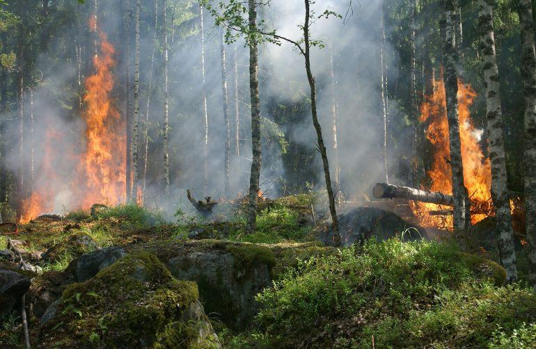 Incendios forestales: ¿cómo pueden ayudar los peritos?